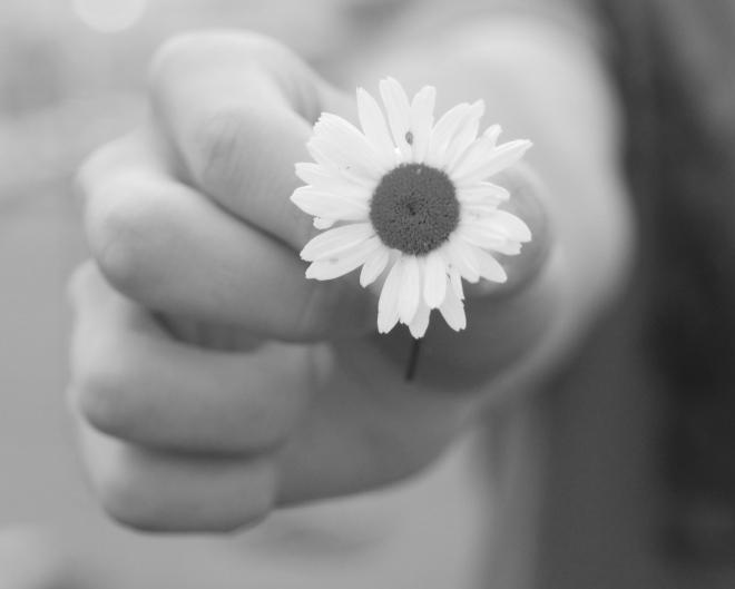 a-daisy-edited-1364660