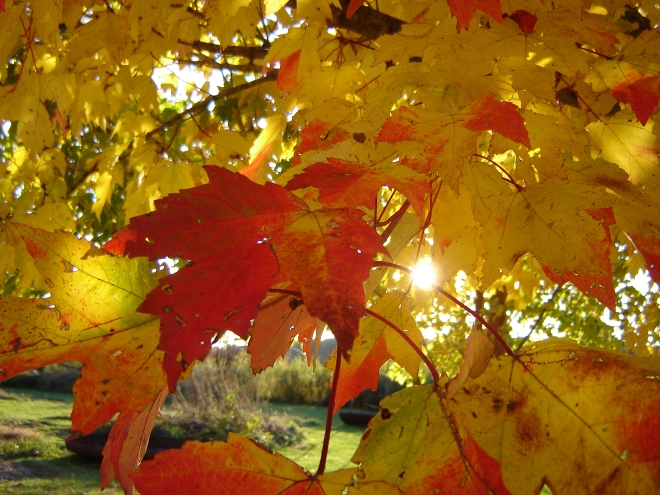 changing-of-the-leaves-3-1186746