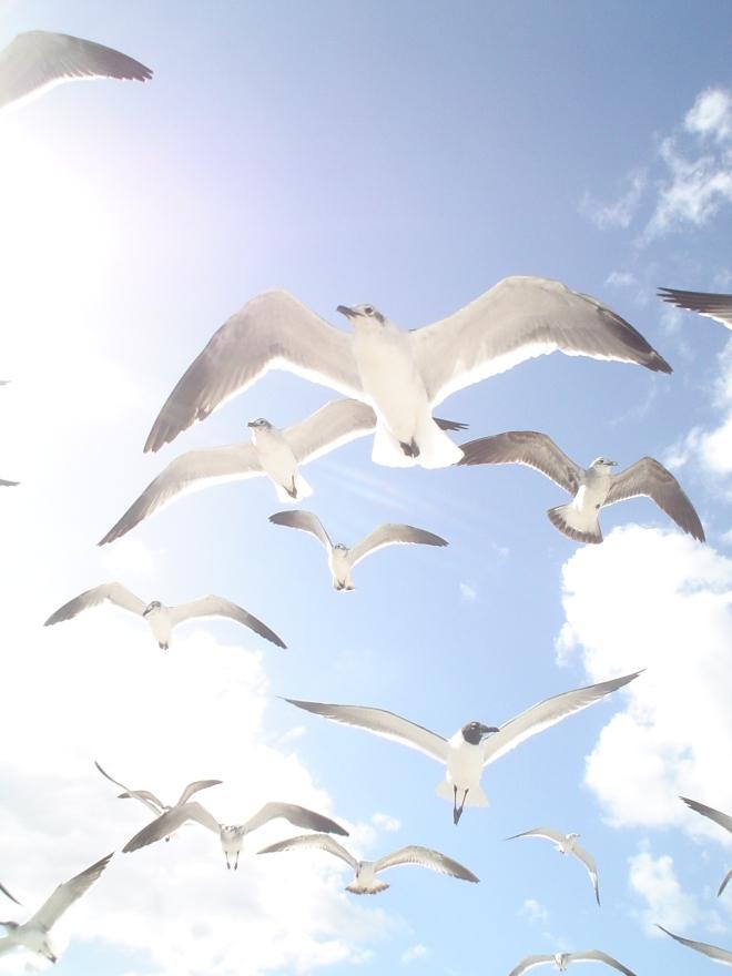 miami-seagulle-1259097
