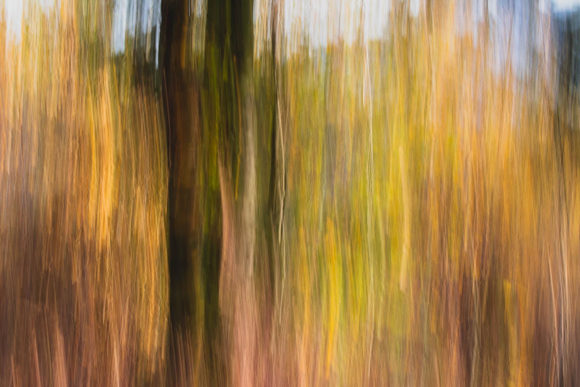 forest-3779411_1920.jpg